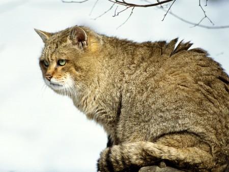 أجمل صور قطط (1)