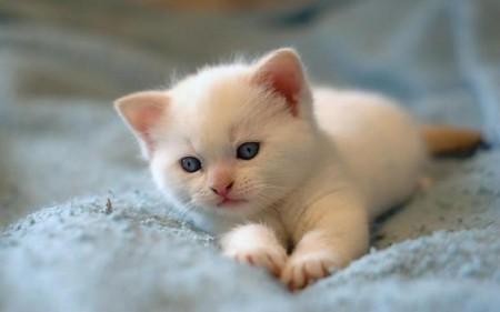 أجمل قطط في العالم (2)