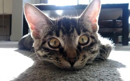 أجمل قطط في العالم (3)