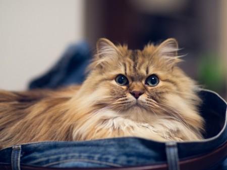 أجمل قطط في العالم (5)