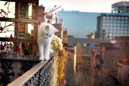 أجمل قطط (1)