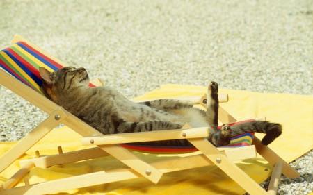 أجمل قطط (4)