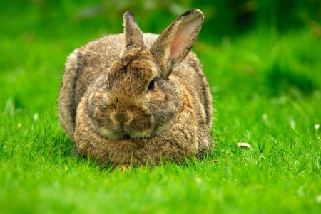 أحلي صور أرانب (1)