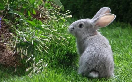 أحلي صور أرانب (5)