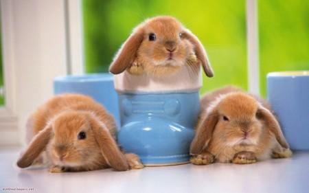 أحلي صور أرانب (8)