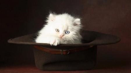 اجدد صور قطط وأجمل القطط بالعالم (3)