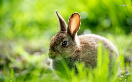 اجمل ارانب (1)