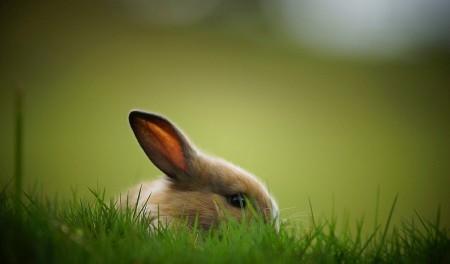 اجمل ارانب (2)