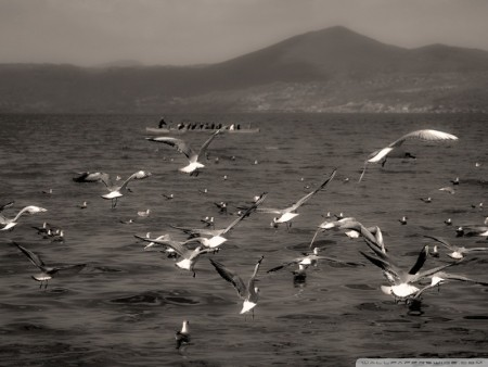 اجمل خلفيات الطيور (1)