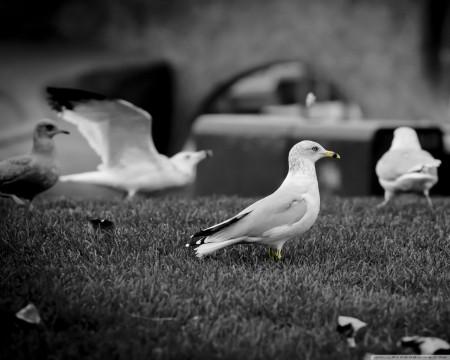 اجمل خلفيات الطيور (3)