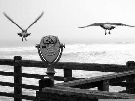 اجمل خلفيات الطيور (4)