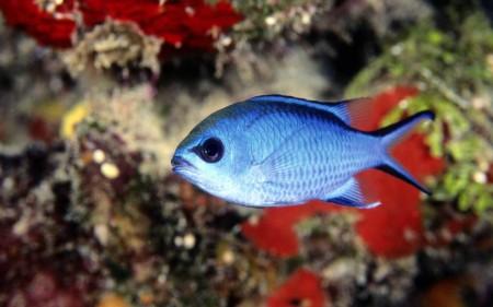 اجمل صور سمك زينة (5)