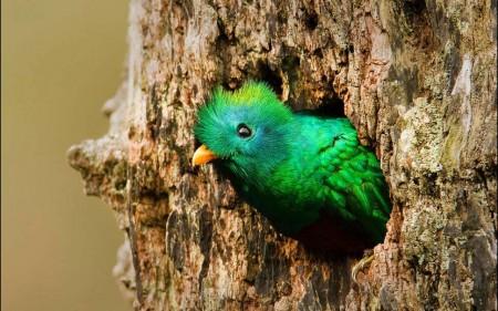 اجمل طيور العالم (1)