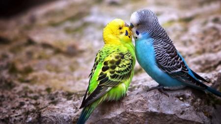 اجمل طيور العالم (2)