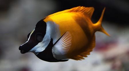 احلي اسماك العالم (1)