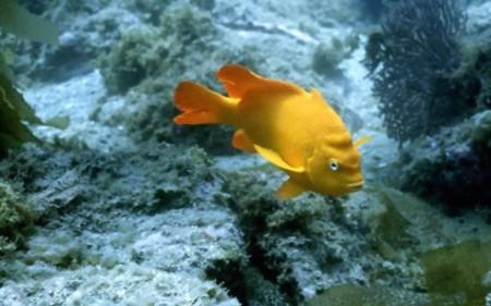 احلي الوان سمك الزينة (1)