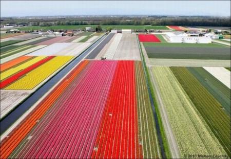 احلي زهور وورد في العالم (1)