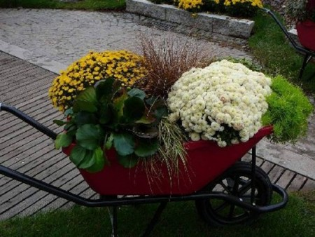 احلي زهور وورد في العالم (3)