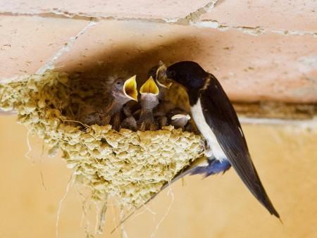 احلي صور طيور (1)