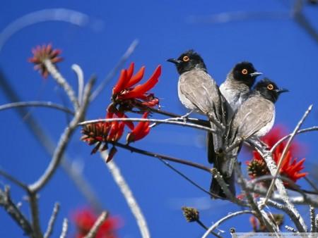 احلي صور طيور (2)
