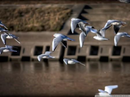 احلي صور طيور (4)