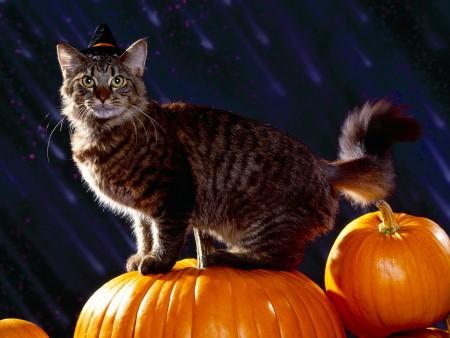 احلي صور قطط جديدة (2)