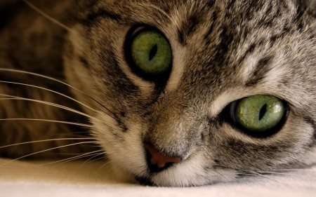 احلي صور قطط جديدة (3)