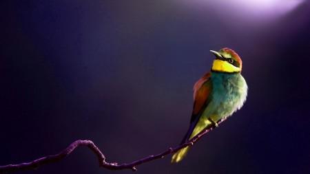 احلي طيور (4)