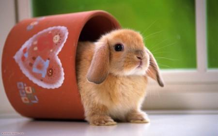 ارانب بالصور (2)