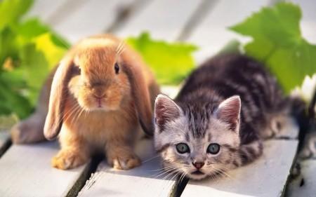 ارانب بالصور (3)