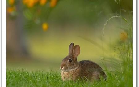ارانب بالصور (4)