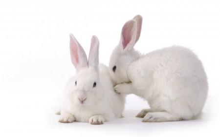 ارانب بخلفيات جميلة (2)