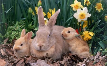 ارانب بخلفيات جميلة (4)