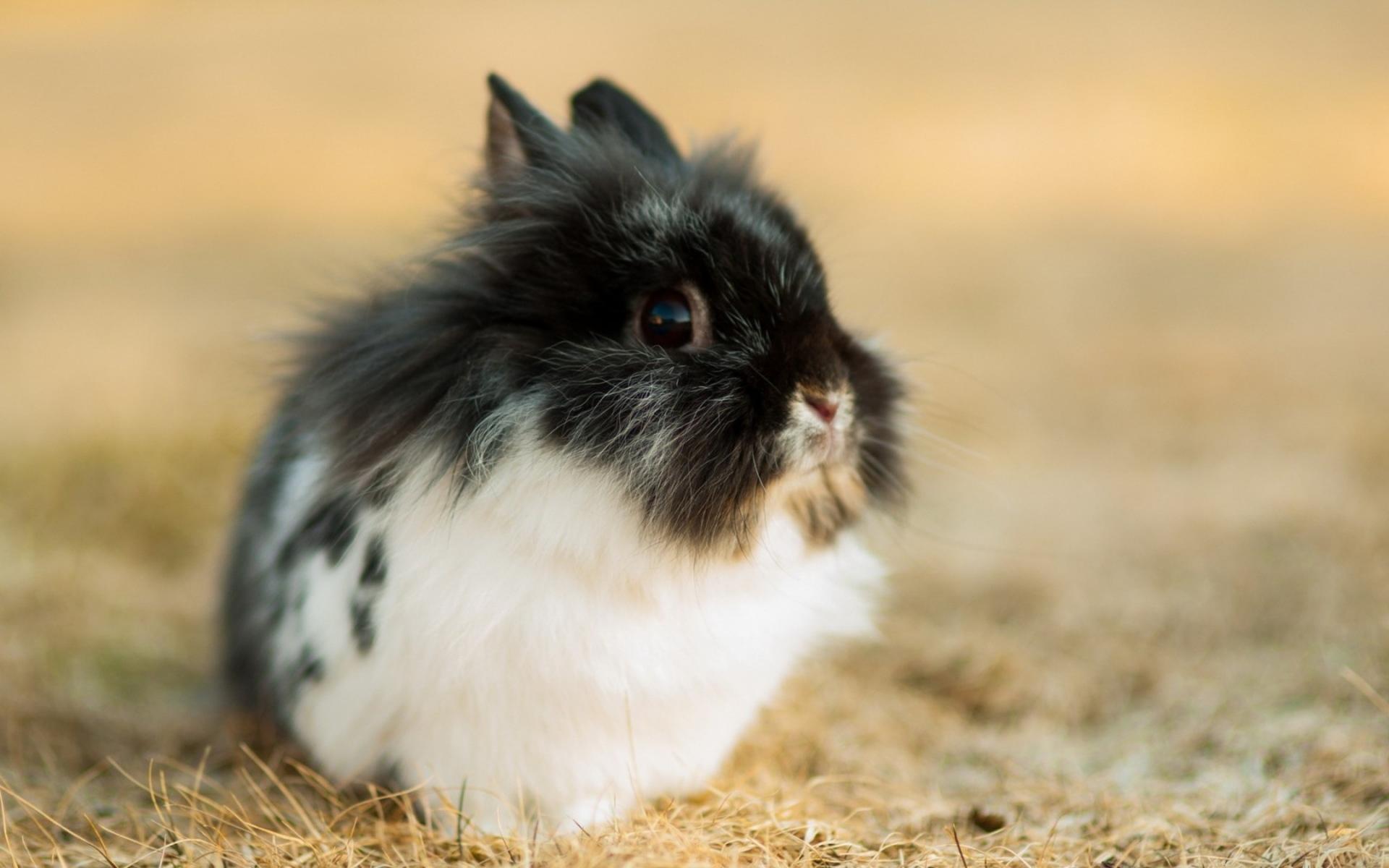 природа животное кролик  № 1593174 загрузить