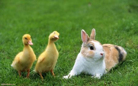 ارانب جميلة جدا (2)