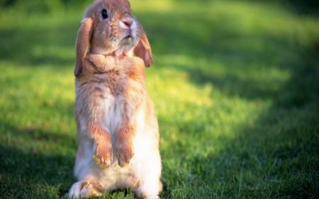 ارانب جميلة جدا (4)