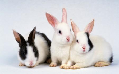 ارانب جميلة جدا (6)