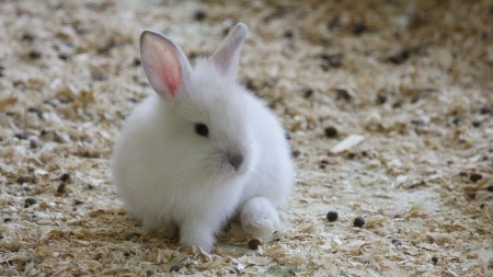 ارانب جميلة (3)