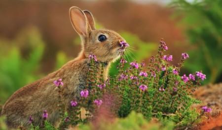 ارانب روعة (3)