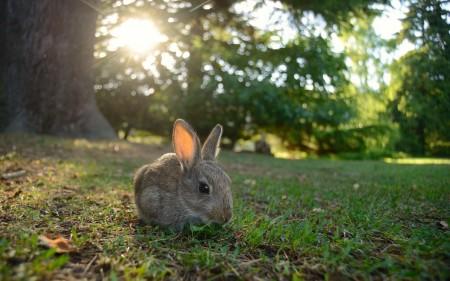 ارانب سلالات (2)