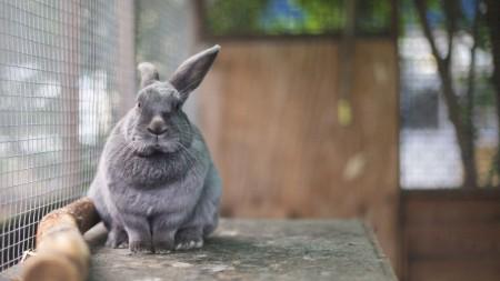 ارانب سلالات (3)