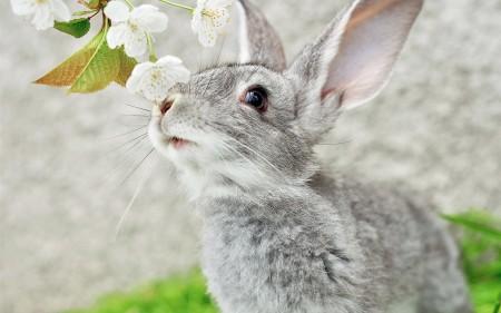 ارانب سلالات (4)