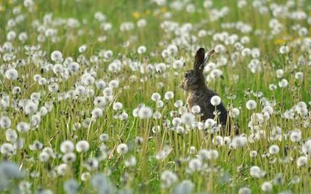 ارانب صغيرة (3)