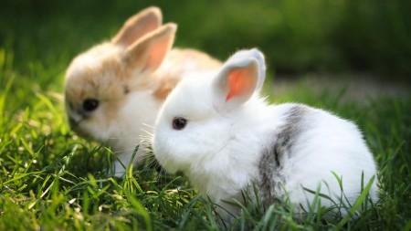 ارانب صغيرة (4)