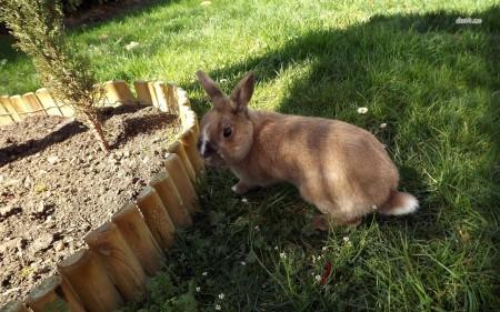 ارانب كيوت (3)
