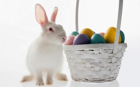 ارانب ملونة روعة (4)
