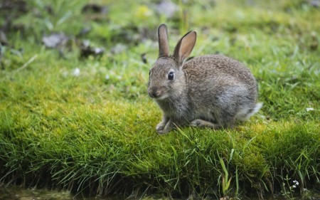 ارانب ملونة روعة (5)