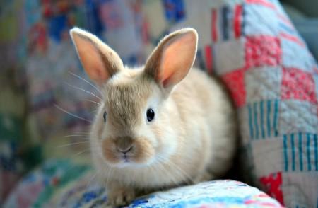 ارانب (1)