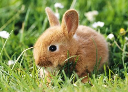 ارنب بالصور (1)