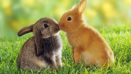 ارنب بالصور (2)